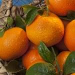 Постер, плакат: Mandarin orange