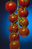 Vine Tomatos — Stock Photo