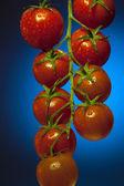 Vine Tomatos — Stock Photo