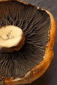 Portabello Mushroom — Stock Photo