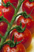 Vine Tomato — Stock Photo