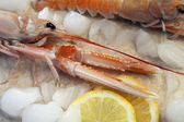 Langoustine or Norwegian Lobster — Stock Photo