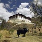 Paro Dzong - Kingdom of Bhutan — Stock Photo #46399631