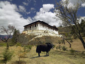 Paro Dzong - Kingdom of Bhutan — Stock Photo
