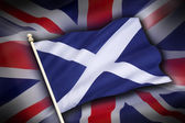 Flags of the United Kingdom and Scotland - Scottish Independence — Stockfoto