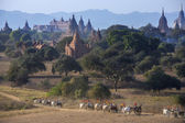 Archaeological Zone - Bagan - Myanmar (Burma) — Stock Photo