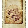 Skull - Foto de Stock  