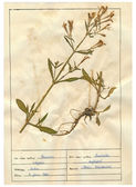 Scanned herbarium sheets - herbs and flowers — 图库照片