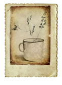 Mug and herbs — Stock Photo