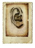 Human ear — Stock Photo