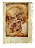 头骨 — 图库照片