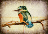 Kingfisher — Stock Photo