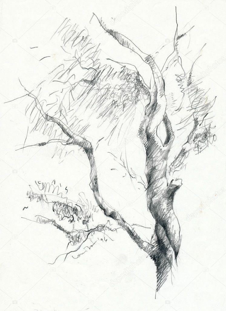 手绘图铅笔图片-树— photo