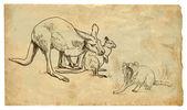 Kangaroos and Tasmanian devil — Stock Vector