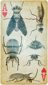 Collector of insect like retro — Stock Photo