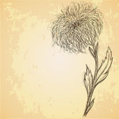 Sketch of chrysanthemum flower on grungy texture — Stock Vector