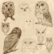 Set of retro owl sketches — Stock Vector