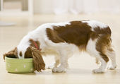 Puppy Eating — Stock Photo