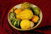 Bowl of Ornamental Squash — Stock Photo