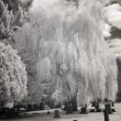 Infrared Photo of a Cemetery — Stock Photo #18656925