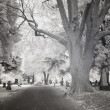 Infrared Photo of a Cemetery — Stock Photo