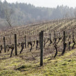 Vineyards, Northern Willamette Valley — Stock Photo