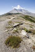Wildflowers in Ash: Windy Ridge, Mount St. Helens — Stock Photo