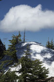 Tree, Cloud, and Snow at Crater Lake — Stock Photo