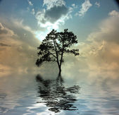 Tree and water — Stock Photo