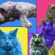 POPart Cats — Stock Photo #19759397