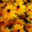 Stock Photo: Floral Abstract