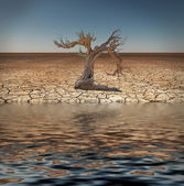 Desert Flood and tree — Stock Photo
