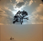 Tree grows in desert scene — Stock Photo