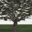 US Hundred Dollar Bill Trees — Stock Photo