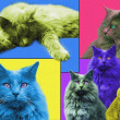 POPart Cats — Stock Photo #29430023