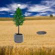 Tree Bulb and Socket in field — Stock Photo