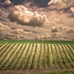 Field landscape — Stock Photo #29438373