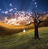 Tree of Light — Stock Photo