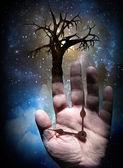 Ağaç el ile — Stok fotoğraf