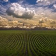 Beautiful agricultural lanscape — Stock Photo