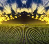 Field landscape — Stock Photo