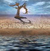 Desert Deluge — Stock Photo