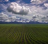 Montana USA Farm — Stock Photo