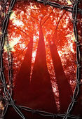 Red Trees with Barbed Wire Frame — Stock Photo
