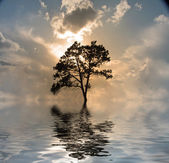 One tree on water, sunset — Stock Photo