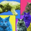 POPart Cats — Stock Photo