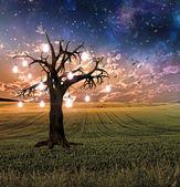 Glowing Bulb Tree Sunset — Stock Photo