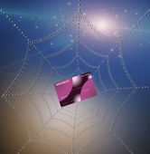 Credit card caught in web — Stock Photo