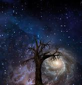 Ağaç ve gece gökyüzünde yıldızlar — Stok fotoğraf