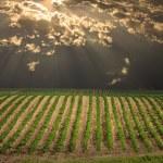 Field landscape — Stock Photo #29504195